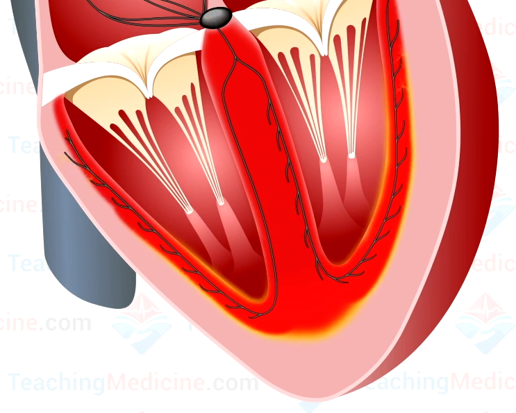 thesis chapter submitted heart myocardium scaffold